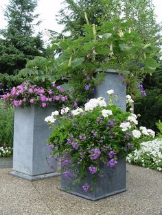 Out of this grouping I like the one with white geranium and purple scaevola. Very pretty and easy. The geranium pop!