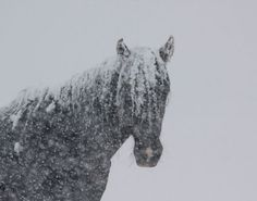 Black Hills Wild Horse Sanctuary...in snowfall