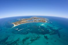 Rottnest Island, WA Finalist - Major Tourist Attractions #QATA2014 #Australia Rottnest Island is a State asset, contributing an estimated $117 million annually. Rottnest Island is a unique/diverse experience from any other Island Holiday or Holiday Getaway destination. Rottnest is a pristine natural environment and a uniquely preserved historical settlement which is located less than 30 minutes from Fremantle, allowing people to discover a different experience when they visit/explore the…