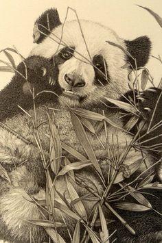 pencil-art-panda-01