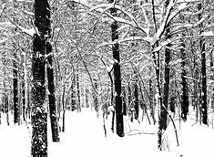 Black And White Winter Forest by Debbie Oppermann