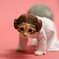 Princess Laya kitty