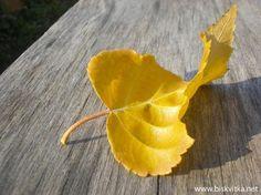 Beautiful autumn nature » Biskvitka.net