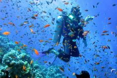 Red Sea Holidays, a trip down the Red Sea http://www.travel2egypt.org/tours/sinai/explore-egypt-and-the-red-sea-8422_110/