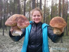 Вот такие белые грибы растут в Сургуте!