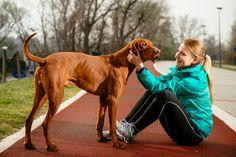 Vizsla dog with owner