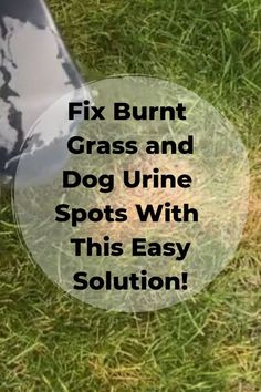 Fix Burnt Grass & Dog Urine Spots With This Easy Solution! Is your backyard full of burnt grass and dog urine spots? Looking for a simple and affordable solution? This simple solution can make all of the difference. No Grass Backyard, Backyard Landscaping, Dog Backyard, Lawn Repair, Cinder Block Garden, Garden Mushrooms, Lawn Care Tips, Dog Urine, Lawn And Garden