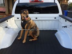 Safety harness for dog to ride in pickup truck bed - YES! safety for pets riding in the bed! Classic Pickup Trucks, Old Pickup Trucks, Pickup Truck Accessories, Car Accessories, Diy Dog Crate, Truck Storage, Dog Safety, Truck Camping, Dog Harness