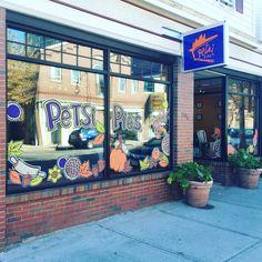 Cambridge location, Petsi Pies on Cambridge Street, Fall window.