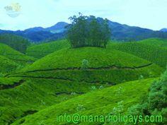 MUNNAR is situated at the confluence of three mountain streams - Mudrapuzha, Nallathanni and Kundala.  Important tourist places in Munnar :   anamudi Peak, Eravikulam National Park, Mattupetty, Pallivasal, Tea Museum, Neelakurinji flowers