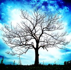 Beautiful silhouette ~ a tree against the sky Adventure World, All Nature, Favim, Tree Art, Tree Of Life, Belle Photo, Pretty Pictures, Beautiful World, The Great Outdoors