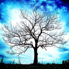 Winter tree in a wild sky
