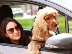 TOP #123: Ridesharing for Dogs and Their Owners Best Dog Food, Dry Dog Food, Best Dogs, Dog Whisperer Tips, Schnoodle Dog, Diarrhea In Dogs, Overweight Dog, Redbone Coonhound, Pet Allergies