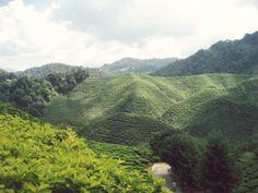 Cameron Highland, Pahang Malaysia