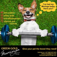 Give your pet the boost they need! Visit our website and on-line shop today! Green And Gold, Health Benefits, South Africa, Your Pet, Website, Pets, Shop, Animals, Animales