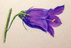 How about having a go at this complex Campanula? Coming soon to ArtTutor as part of our Pastels Floral Module