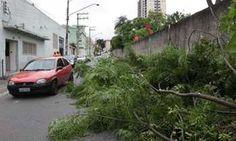 Uma árvore cai a cada dois dias no Grande ABC