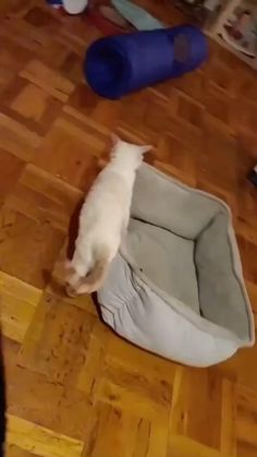 Funny Cat Pictures, Cute Animal Pictures, Funny Animal Videos, Cute Little Kittens, Cute Baby Cats, Funny Cute Cats, Cute Funny Animals, Puppies And Kitties, Cats And Kittens
