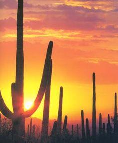 Saguaro National Park - Tucson Arizon