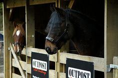 Kaimanawa Horse Stalls - Outpost are sponsors of the Wilson Sisters & their efforts to save & train wild Kaimanawa Horses in New Zealand