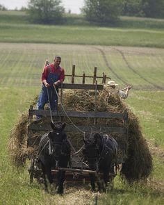 Hay harvest..