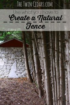 Create a Natural Fence