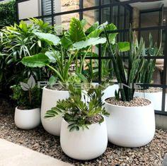 Potted Plants Patio, House Plants Decor, Indoor Plants, House Landscape, Landscape Design, Garden Design, Garden Steps, Garden Pots, Outdoor Planters