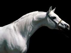 Enya - The River Sings - Beautiful pictures of horses to go with a beautiful song