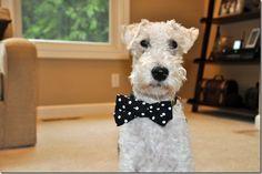 Dog bow tie tutorial
