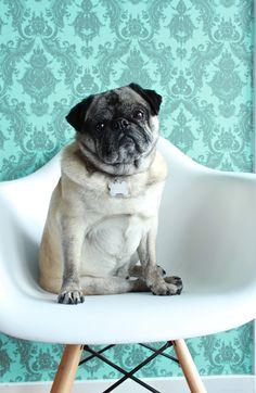 Nigel Pugmann - Modernica Pets on Furniture