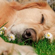 A nap in the grass is golden