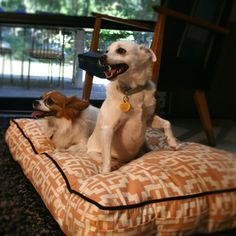 Modern dog beds Www.fleabagbed.com