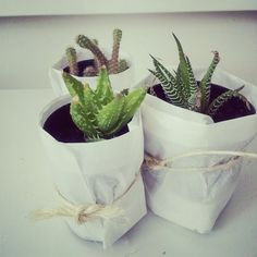 home; cacti