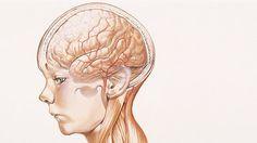 ¿Existen diferencias cerebrales determinadas por la crianza en cierto nivel socioeconómico desde la niñez?