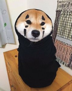 Image about cute in 💎 Shiba Inu 💎 by Lissy on We Heart It Cute Funny Animals, Cute Baby Animals, Animals And Pets, Cute Puppies, Cute Dogs, Dogs And Puppies, Corgi Puppies, Shiba Inu, Kittens