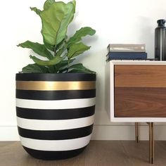 Stripe Pot