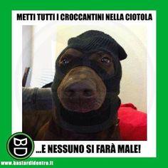 Esistono i #cani da riporto e i cani da rapina... #bastardidentro www.bastardidentro.it