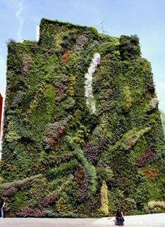 Designed by Patrick Leblanc, French landscaper. Vertical gardening.