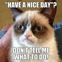 Grumpy Cat #GrumpyCat #Humor #Meme #LIFECommunity #Favorites From Pin Board #13