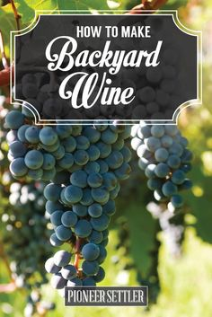Check out How to Make Wine in Your Backyard | Winemaking Basics at http://pioneersettler.com/how-to-make-wine-at-home/