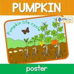 Pumpkin Life Cycle, Best Low Carb Recipes, A Pumpkin, Life Cycles, Green Beans, Kindergarten, The Unit, Activities, Poster
