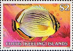 Cocos Keeling Islands 1979 Fishes SG 47 Melon Butterflyfish Fine Mint Scott 50  Other Cocos Keeling Island Stamps HERE