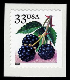 Blackberries, a classic summer fruit. The Postal Service issued the Fruit Berries, a group of 33-cent stamp USA 2000.