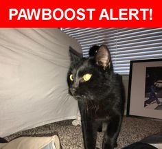 Is this your lost pet? Found in Kansas City, MO 64152. Please spread the word so we can find the owner!  Black golden eyes  Nearest Address: Near N Stoddard Ave & NW 78 St