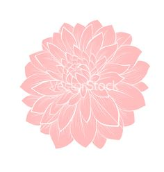 Dahlia flower isolated on white vecto by JENYA777LEVCHEN on VectorStock®