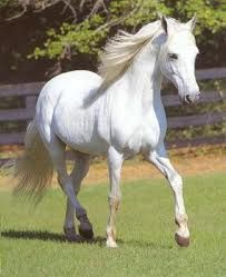 Who needs a man on a white horse to rescue you anymore? Just give me the white horse!
