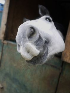 Just one kiss...one thats all I ask for, and carrots...maybe a few apples too!!:)