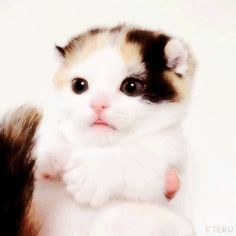 This kitty gif is the cutest!