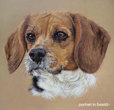 beagle-portretinbeeld.jpg 1.339×1.284 pixels
