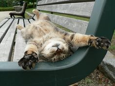 Kitty stretching out on a bench. So cute..